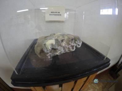 """Uno de los ejemplares mas grandes dentro del Museo - Guía Turística - Sitio Paleontológico """"El Mamut"""""""