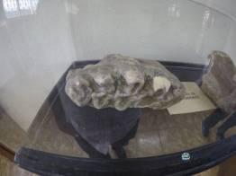 """muestras de la mega fauna que hubo en Guatemala 1 - Guía Turística - Sitio Paleontológico """"El Mamut"""""""