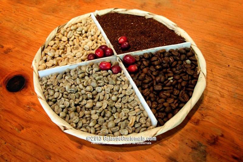 el cafe de guatemala en las diferentes etapas foto por maynor marino mijangos - Actividades en La Antigua Guatemala