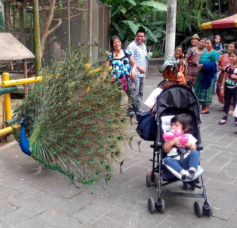 familias disfrutando de irtra petapa foto por raulin contreras - Los feriados y asuetos en Guatemala