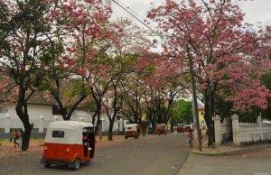 Camotan, Chiquimula - árboles de Matilisguate - Carlos Zaparolli