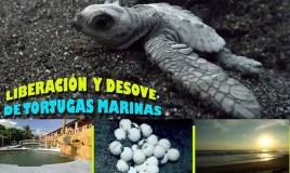 Evento – Liberación y desove de tortugas marinas
