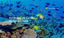 Arrecifes de Coral en Guatemala