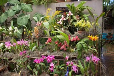 exposicion1 foto por ago - Exhibirán más de 1,500 especies de orquídeas