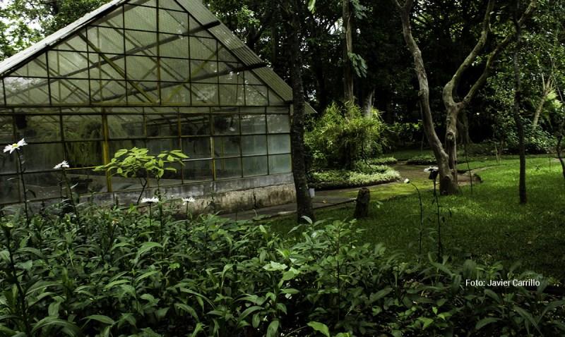 Jard n bot nico de guatemala solo lo mejor de guatemala for Jardin botanico eventos