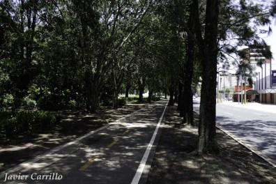 mg 5459 - Guatemala planea para 200 km de ciclovía en la capital