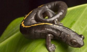 Animales que sólo han existido en Guatemala