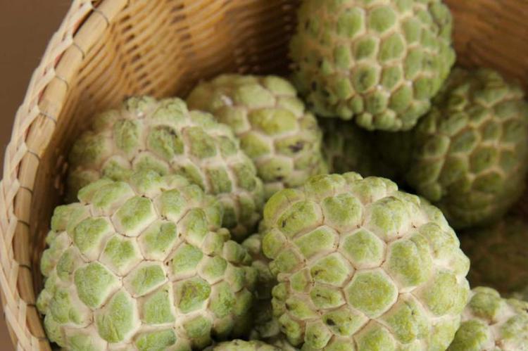 propiedades de la anona 2 - 10 Frutos nativos de Guatemala