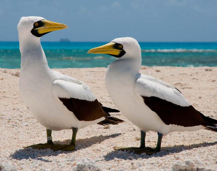 5702927666 58b6d8d9e9 b - 10 Tipos de Aves en Guatemala