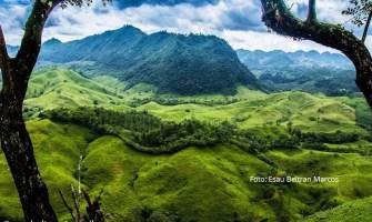 Tipos de Vegetación de Guatemala
