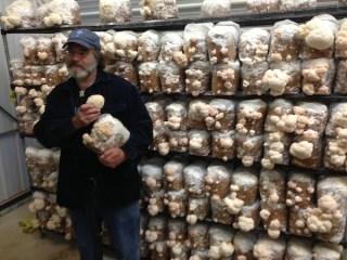 Stamets segura diversos cogumelos lions mane que ele cultivou. Estudos mostraram que eles podem ter pistas na luta contra doenças como alzheimer, esclerose múltipla e demência.