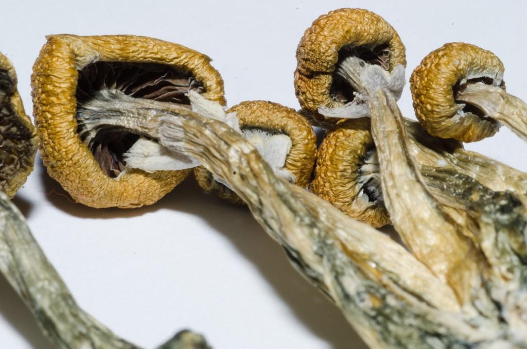 Cogumelos mágicos