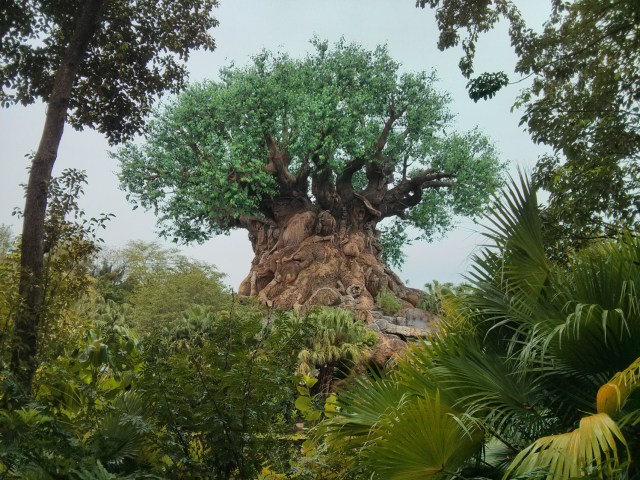 Árvore da vida animal kingdom