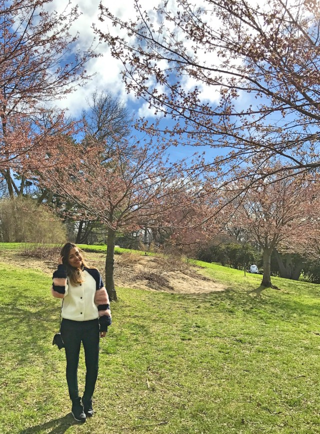 High Park Cherry Blossoms 2017