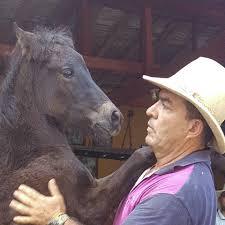 El imprintinges un manejo especial del potroen el cual la persona interactúa con el animal y establece un vínculo que además permanecerá toda la vida