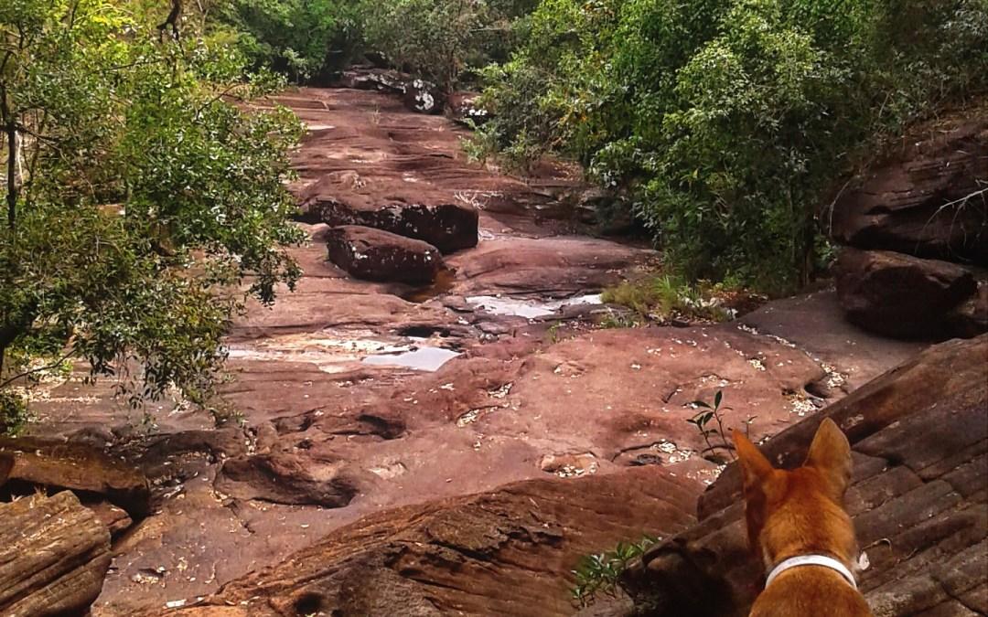 Adventures at Phu Wua Wildlife Sanctuary