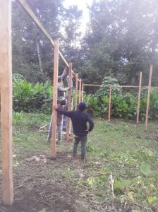 creating a greenhouse
