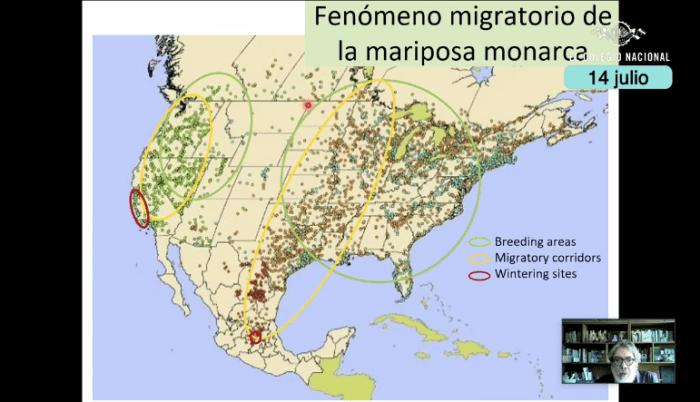 Visualización del fenómeno migratorio de la mariposa monarca