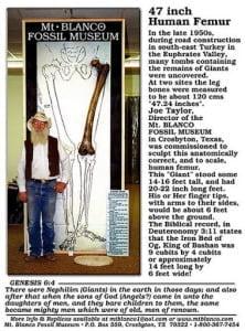 Fósil de Fémur Gigante en Museo de Monte Blanco