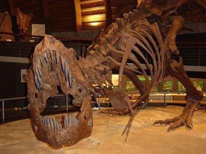 Foto 2: Esqueletos de dinosaurios