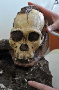 Roca que contiene 'el cráneo más completo de dos millones de años'