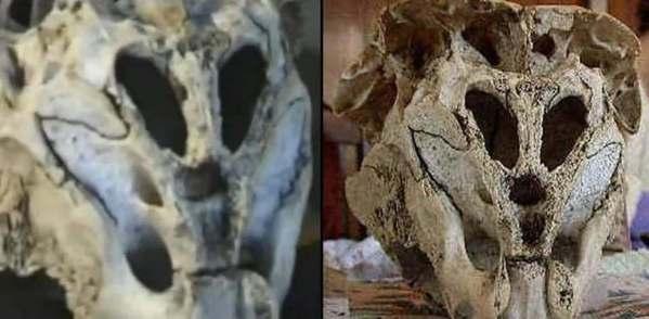 Cráneo de Ródope: ¿Criatura real extraterrestre?