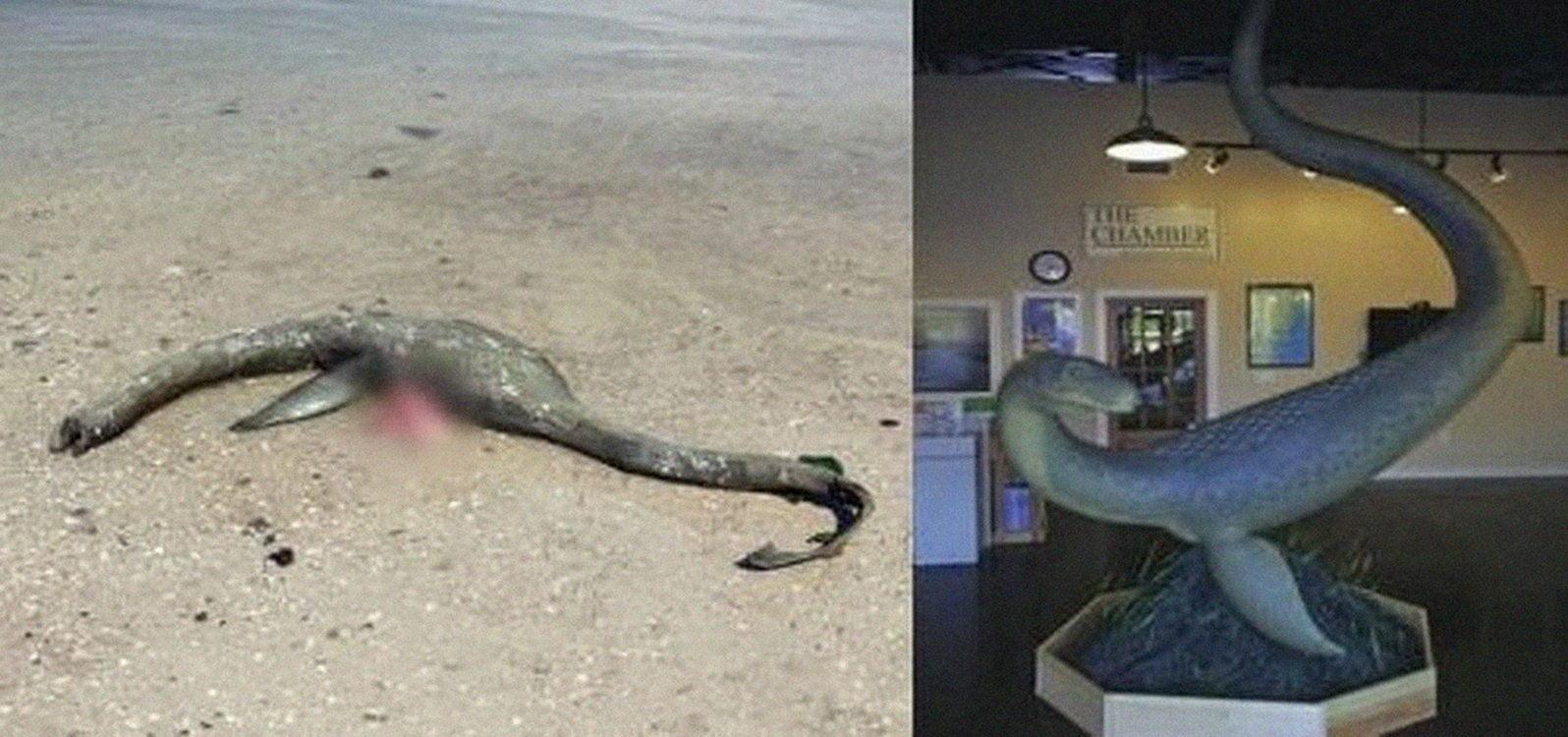 Misteriosa criatura marina como la del Lago Ness emerge en South Georgia Beach