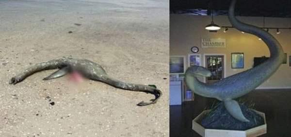 Misteriosa criatura marina emerge en South Georgia Beach
