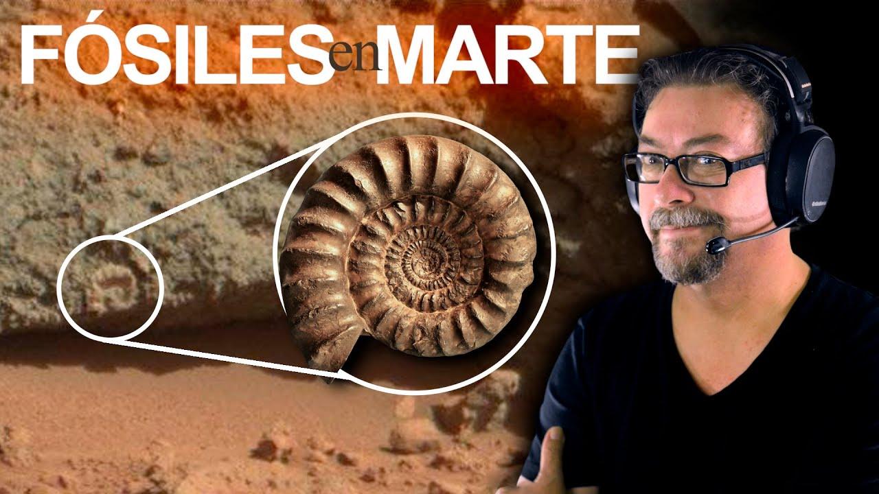 Fósiles en Marte y NASA ni se Entera (¿o si se ha Enterado?)