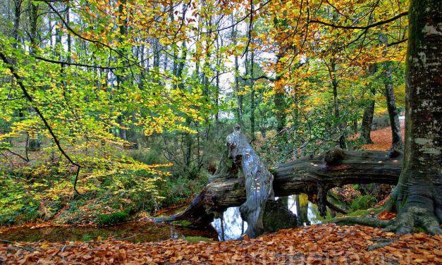 Las energías curativas de los árboles