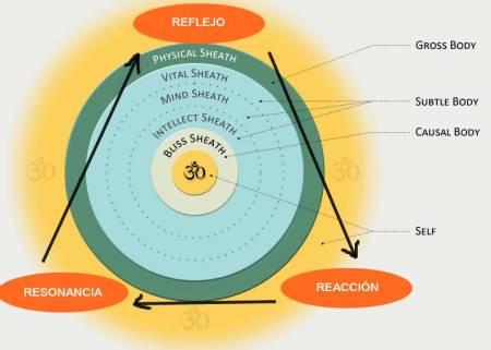 5-sheaths reflejo reaccion resonancia