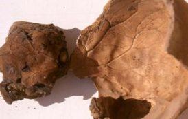 skull imprint brain1 - inicio