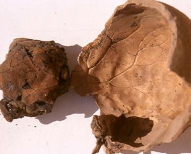 Los arqueólogos encuentran momia egipcia con el cráneo peculiar impronta que contiene el cerebro