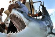 La pesca ya tiene una fecha de caducidad (y está muy cerca)