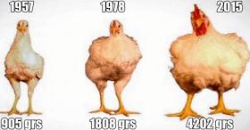 Mira Cómo La Modificación Genética Ha Cambiado nuestros Alimentos y nuestro Mundo