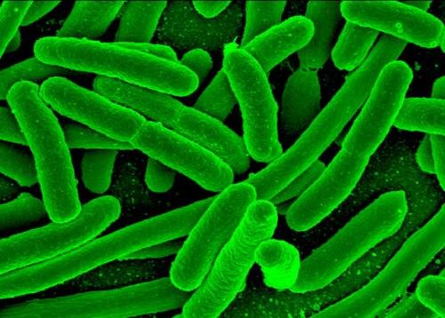 bacterias 1 - La amenaza de las superbacterias