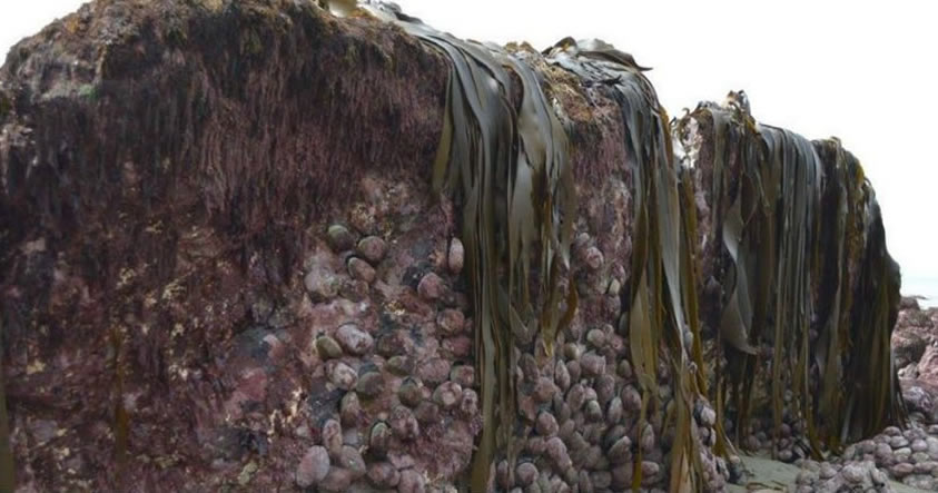 El terremoto de Nueva Zelanda fue tan intenso, que levantó el lecho marino 2 metros sobre el suelo
