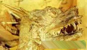 14927603495161815665112 - ¿Existieron los dragones? En China tienen EVIDENCIAS definitivas.