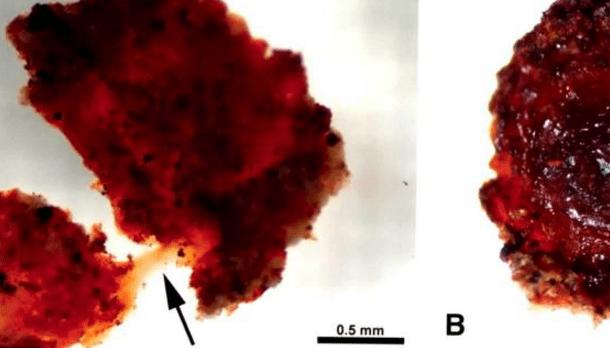 La Historia fue mal contada: Muestra de sangre revela que los dinosaurios NO se extinguieron hace millones de años.