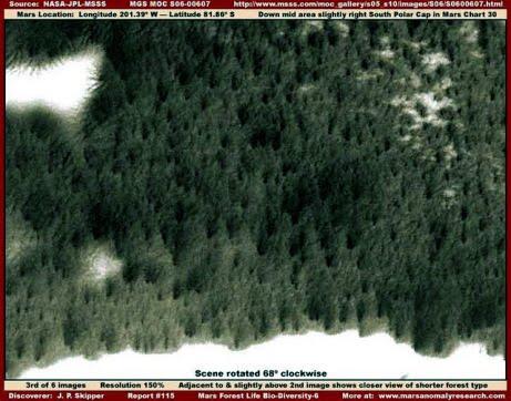 """forest mars1 - Vegetación en: """"El polo sur de Marte""""."""