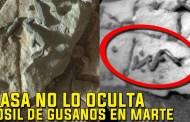 NASA NO LO OCULTA encuentran un Fósil de Gusano en Marte