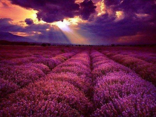 campo-de-flores