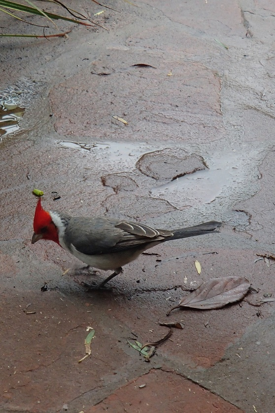 Pica-pau, uma das inúmeras espécies de pássaros que vivem nos Esteros del Iberá