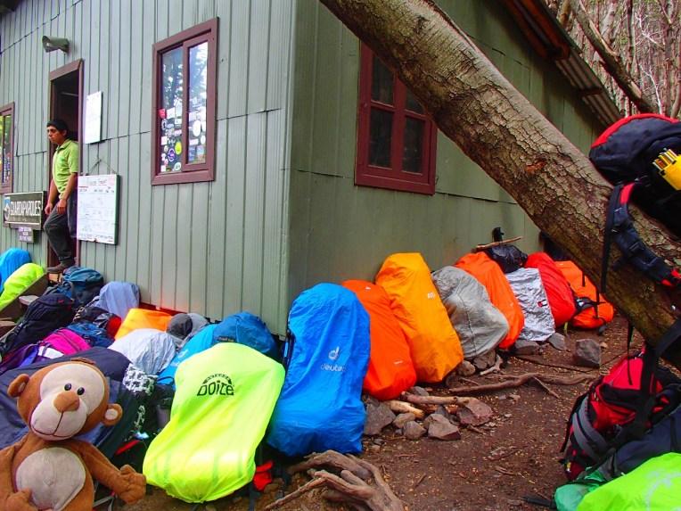 Mucuvinha em Torres del Paine