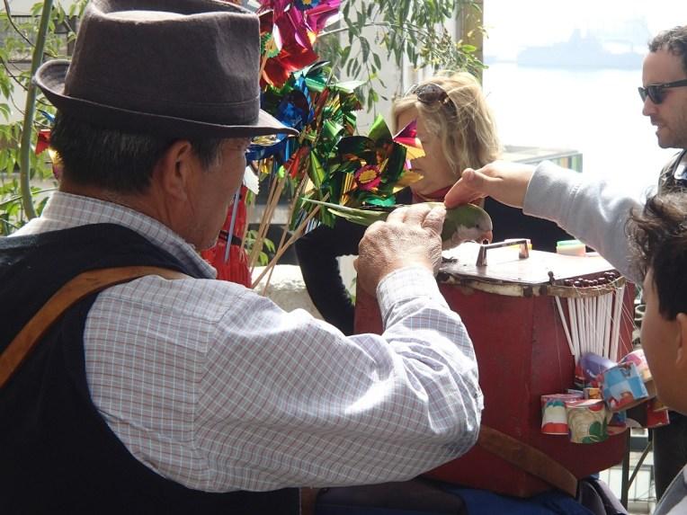 Papagaio da sorte em Valparaíso