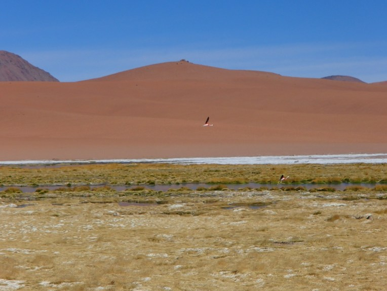 Flamingos no Deserto do Atacama