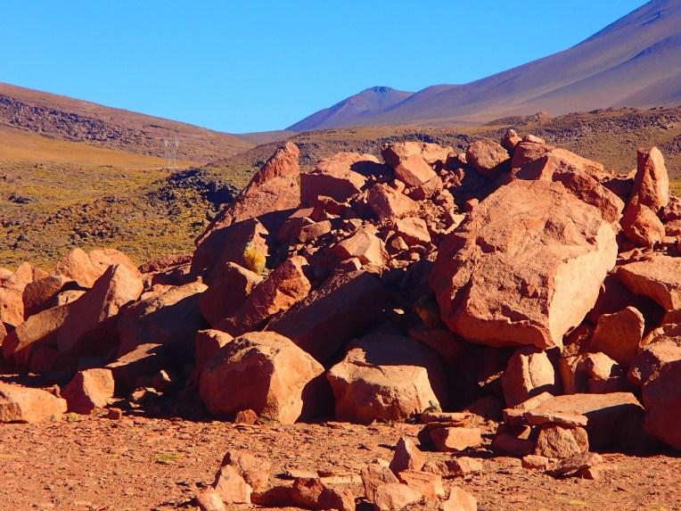 Coelhos no deserto do Atacama