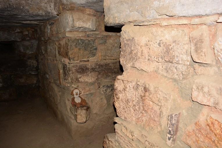 Mucuvinha descansando nas galerias subterrâneas de Chavin