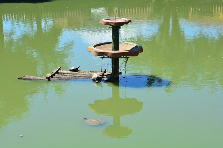 Pequena reserva com tartarugas em Nauta