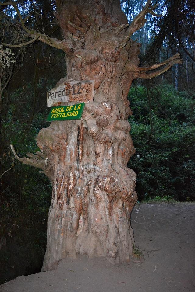 Árvore da Fertilidade